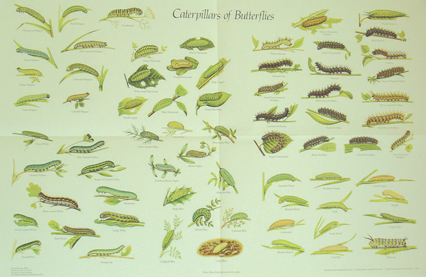 Orkin - Insect Identification Guide