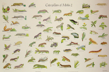 Insect identification charts - Watkins & Doncaster