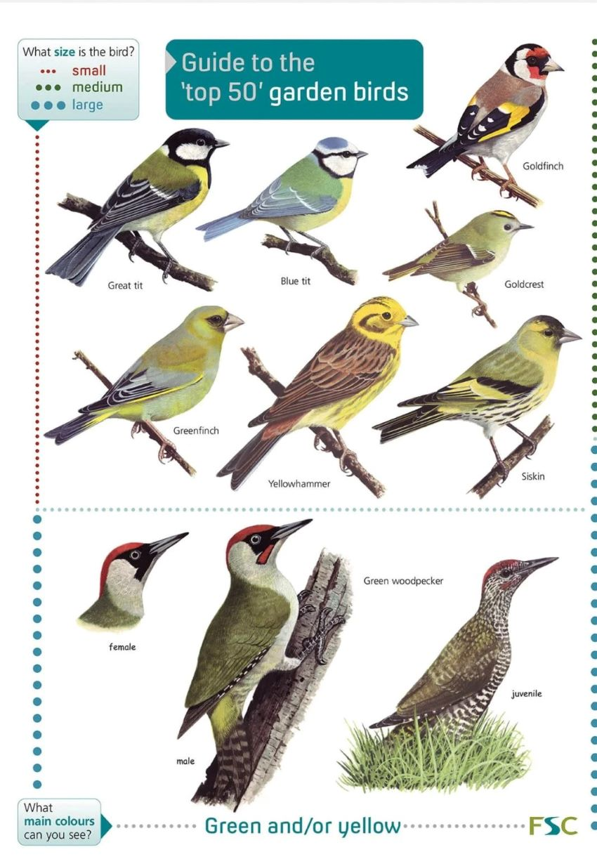 Names Of Birds With  Letters